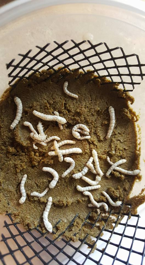 Silk Worm Habitat  NEW 50 COUNT OUT OF STOCK UNTILL JAN 19 TH