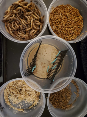 LEOPARD GECKO VALUE PACK