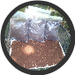 (4 GALLON BAG'S) ROTTEN OAK MEDUIM