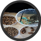BEARDED DRAGON SAMPLE  PACK